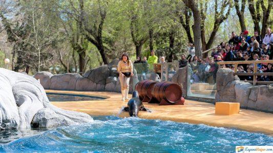 actividades zoo madrid