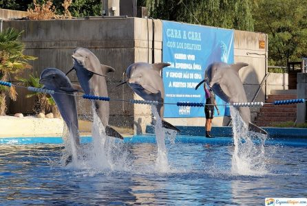 delfines zoo aquarium madrid