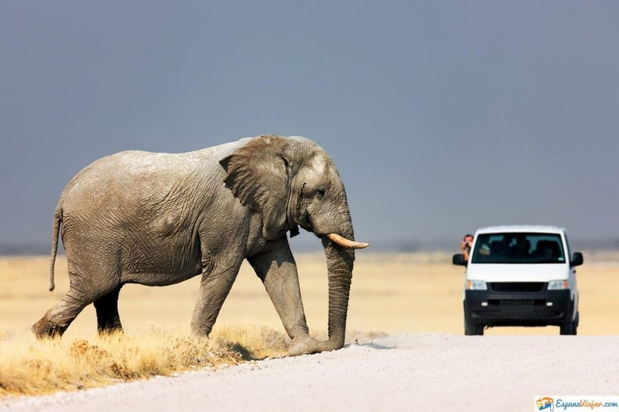 elefante en safari madrid