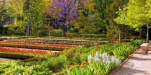 jardin botanico madrid