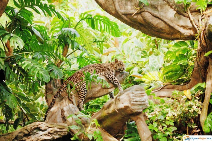 madrid safari