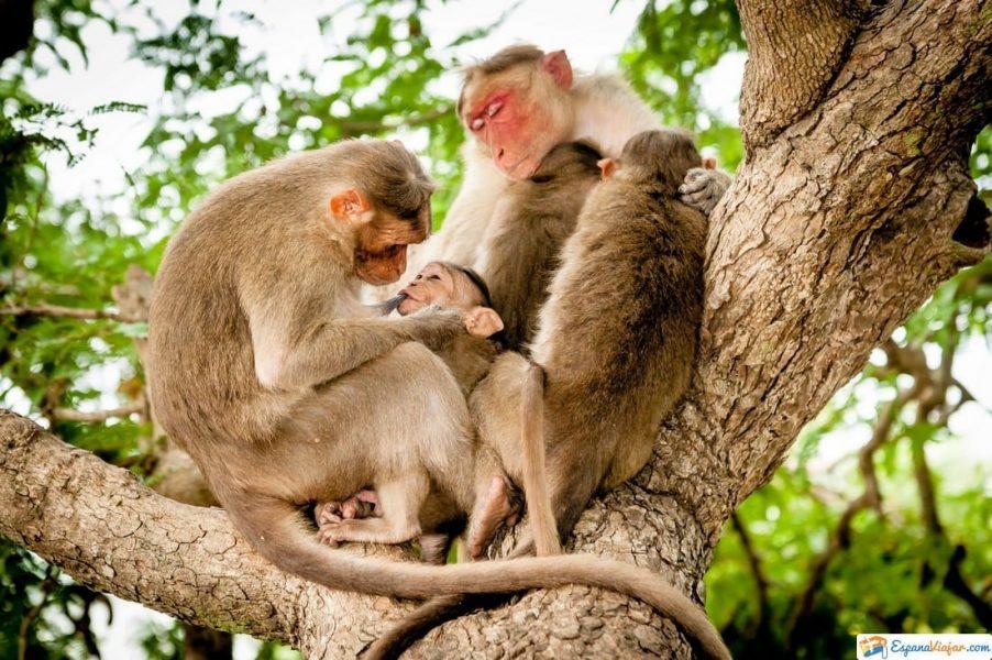 monos safari madrid