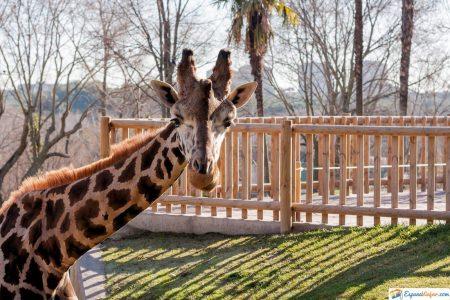 visitar zoo madrid