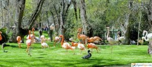 zoo en madrid