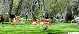 zoo en madrid