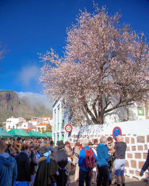 Fiesta de Almendro en flor