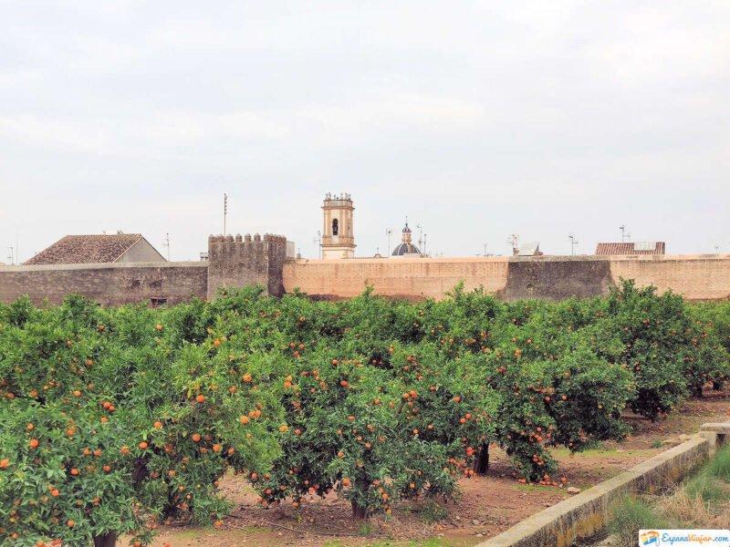 Naranjos de Mascarell