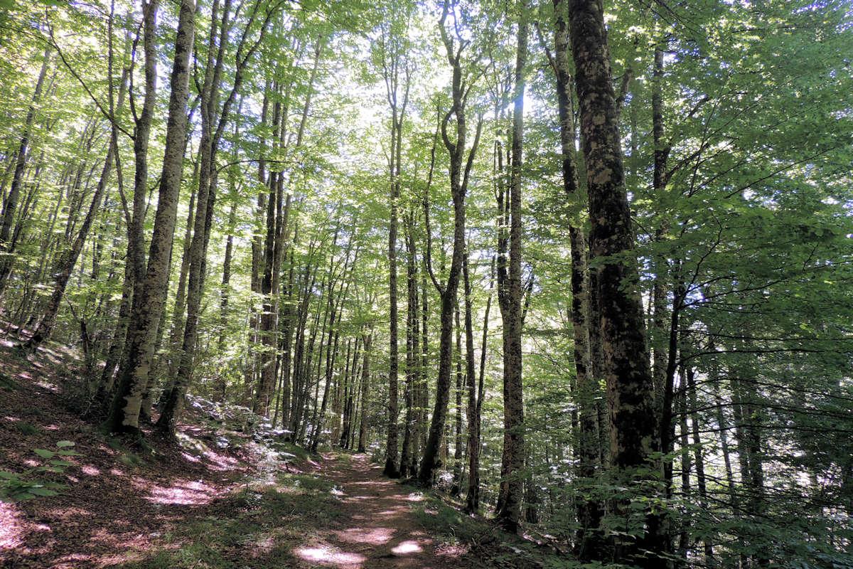 Selva-de-Irati-Navarra