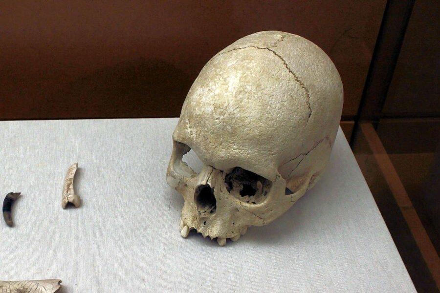 Cráneo humano localizado en estratos paleolíticos de la Cueva de la Sarsa
