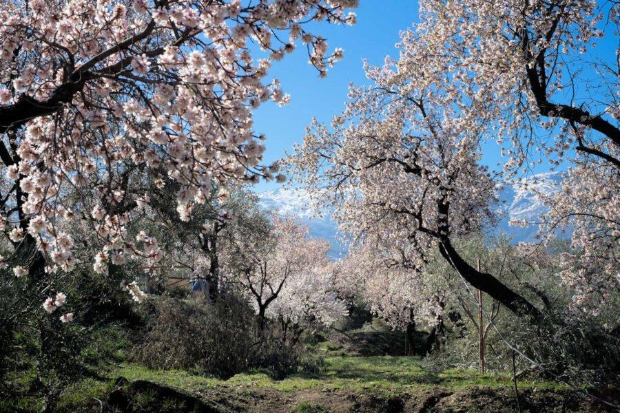 Visitar Abrucena en Primavera