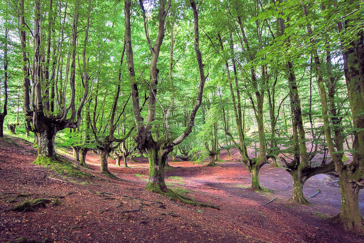 Parque-Natural-del-Gorbea-Viscaya