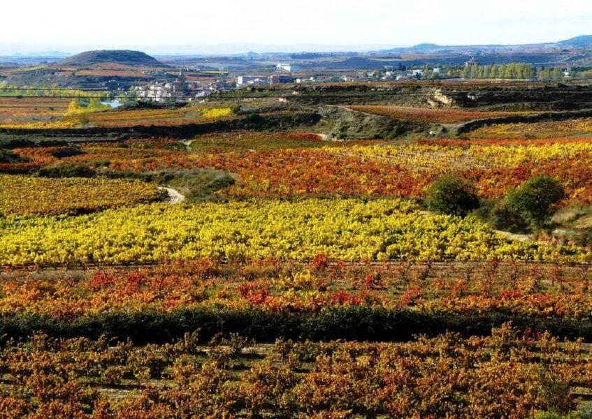 Campos de viñedos en Briñas