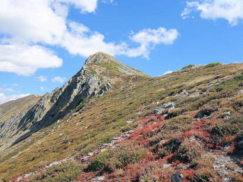 Pico Catoute