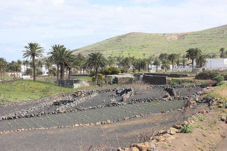 Valle de mil palmeras