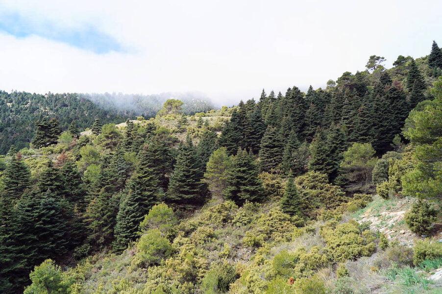 Parque natural de la Sierra de las Nieves en Yunquera